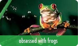 obsessed with frogs