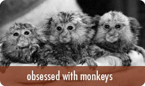 obsessed with monkeys