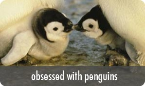 obsessed with penguins